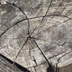 wood-366735_640